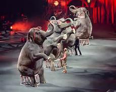 thWVWH0IIN elephants